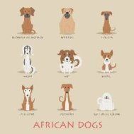 Breeds from Africa Link