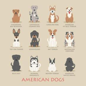 an Infographic of clip art images of American Bred Dogs