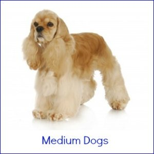 Medium Size Dog Breeds