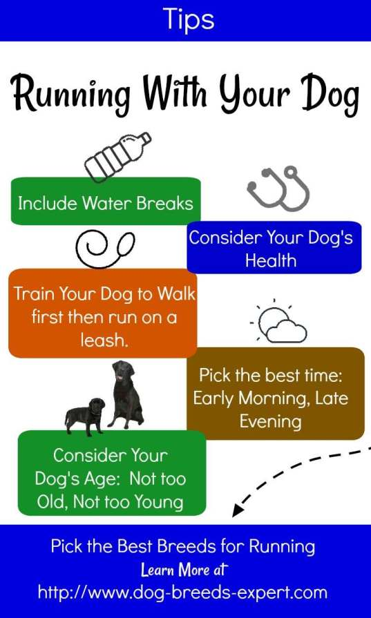 Tips for Running With Your Dog Infographic