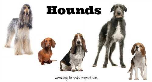 List Of Non Sporting Dog Breeds