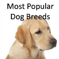 Most Popular Dog Breeds Link