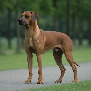 Return To Me Dog Breed