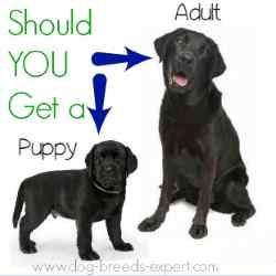 Age Considerations for choosing a breed:  Puppy or Adult