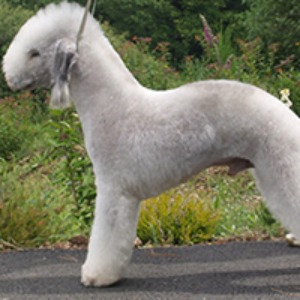... Terrier. Everything you want to know about this weird dog breed