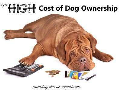 The High Cost of Dog Ownership