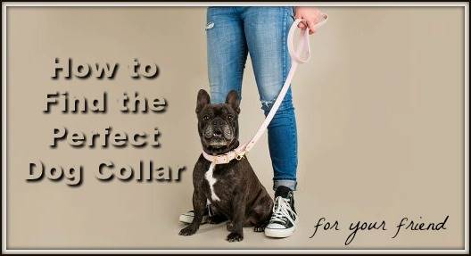 Dog Collar Header Image