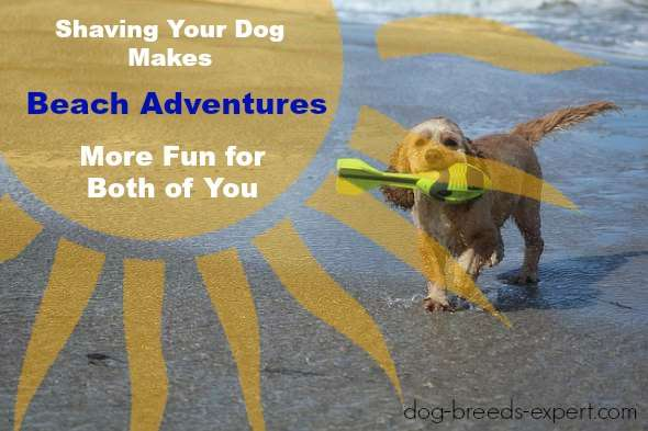 Shaving Your Dog Makes Beach Adventures more fun for both of you.