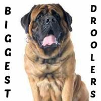 Dogs that Drool Link