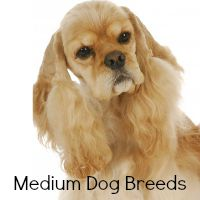 Medium Dog Breeds Link