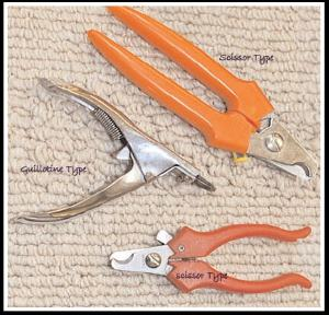 Types of Dog Nail Clippers