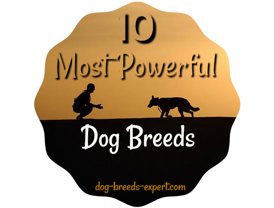 10 Powerful Dog Breeds