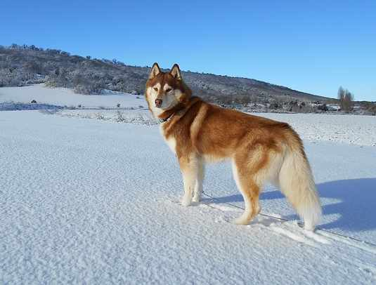 Top 10 Powerful Dog Breeds