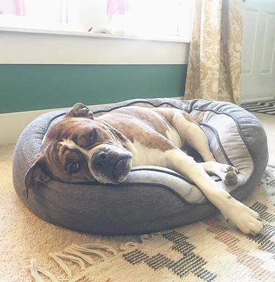 He loves to lounge in his bed that's too small for him