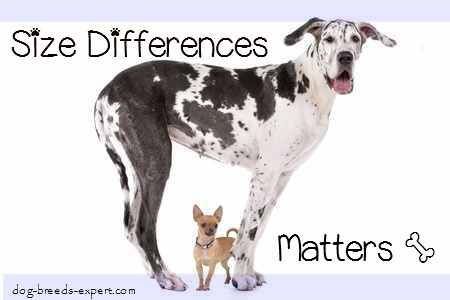 Sizes of Dogs:  Size Differences Matter