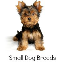 Small Dog Breeds Link