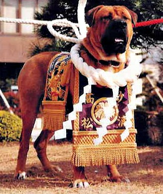Japanese Tosa Dog