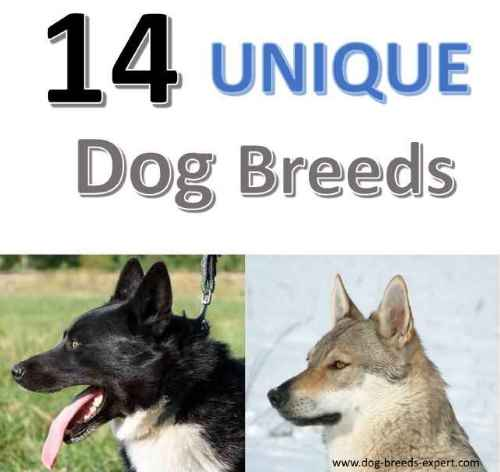 14 Unique Dog Breeds from Around the World