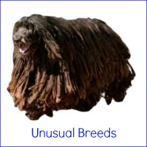 The most unusual dog breeds.