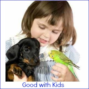 Dog Breeds good with Children