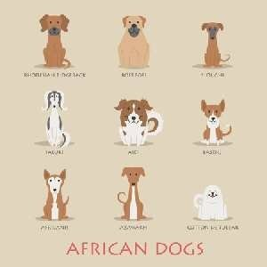 African Dog Breeds Icon picture