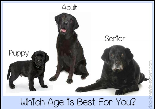 Puppy or Adult what is best for you?