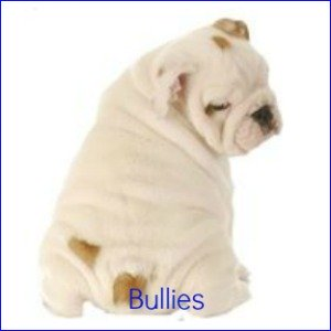 All the world's Bull Dog Breeds