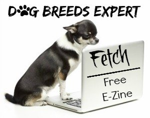 Dog Breeds Expert Newsletter