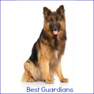 Best Guard Dogs