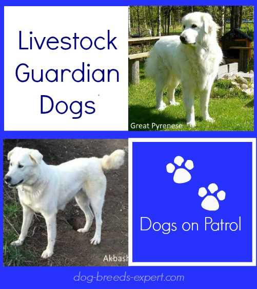 Livestock Guardian Dogs Graphic