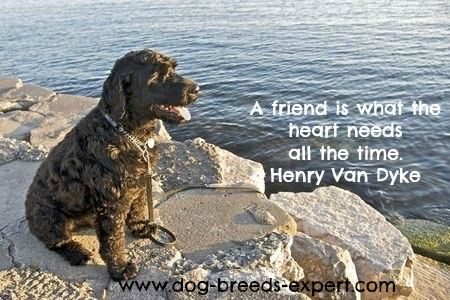 Dog Quote with a Portuguese Water Dog