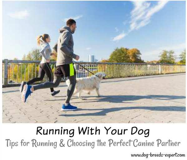 Running With Your Dog:  Tips for Running and Choosing the Perfect Canine Partner