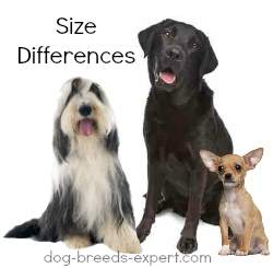 Sizes of Dogs