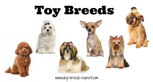 Toys For Groups : List of dog breeds and groupings