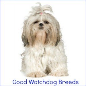 Dog Breeds that make great watchdogs