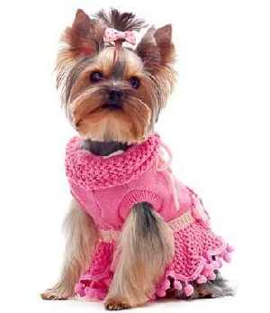 Yorkshire Terrier in a pink dress.